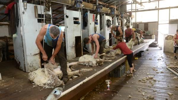Wool succumbs to global economic fallout