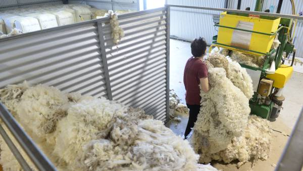 COVID-19 causes carnage at Aussie wool auctions
