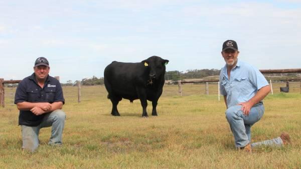 Mandayen Angus secures $20,000 half share in Glatz's sire