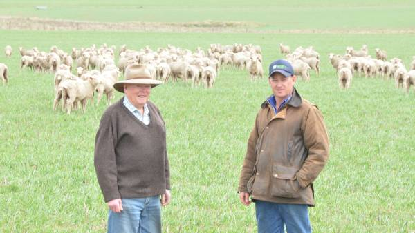 Bargains – WA ewes bought before the price bubble burst