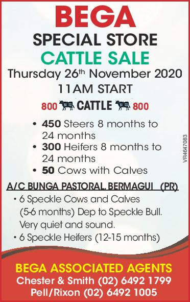 BEGA SPECIAL STORE CATTLE SALE
