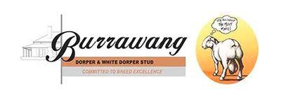 Burrawang Ewe Sale on Auctions Plus