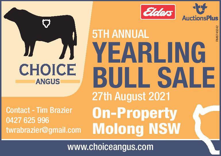 Choice Angus 5th Annual Yearling Bull sale