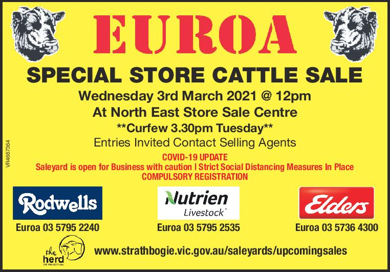EUROA  SPECIAL STORE CATTLE SALE