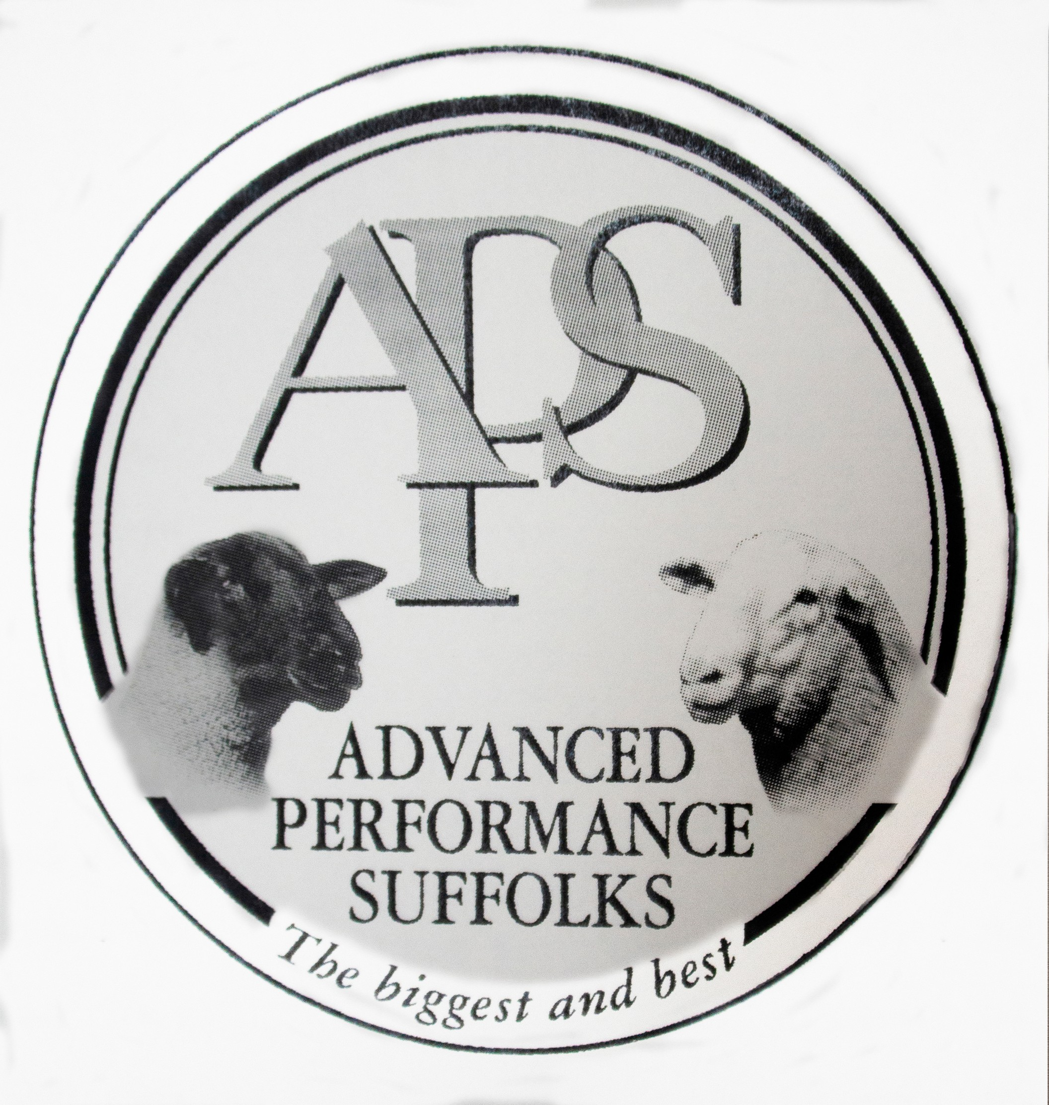 Advanced Performance Suffolks Dispersal sale - Day 1 - White Suffolks - Online