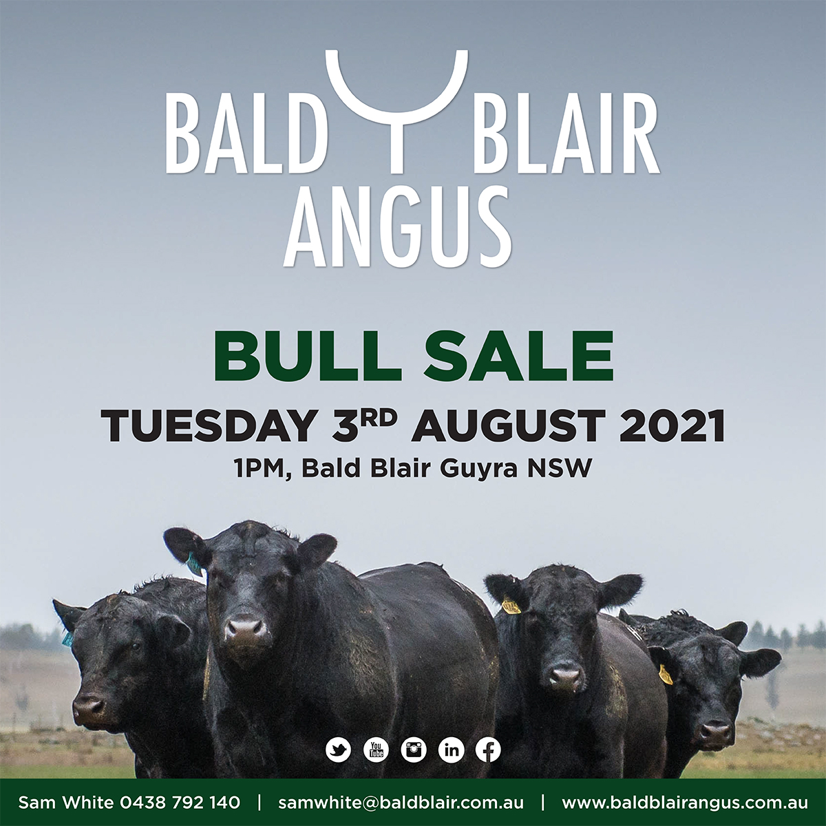 Bald Blair Angus Bull Sale