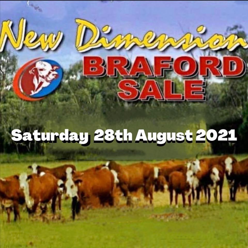 New Dimension Braford Sale