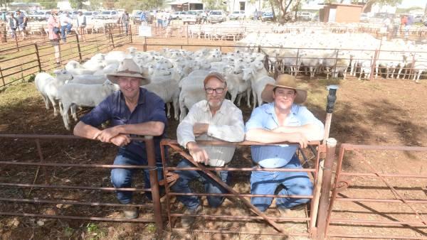 Abundant lamb supplies lead to erratic prices