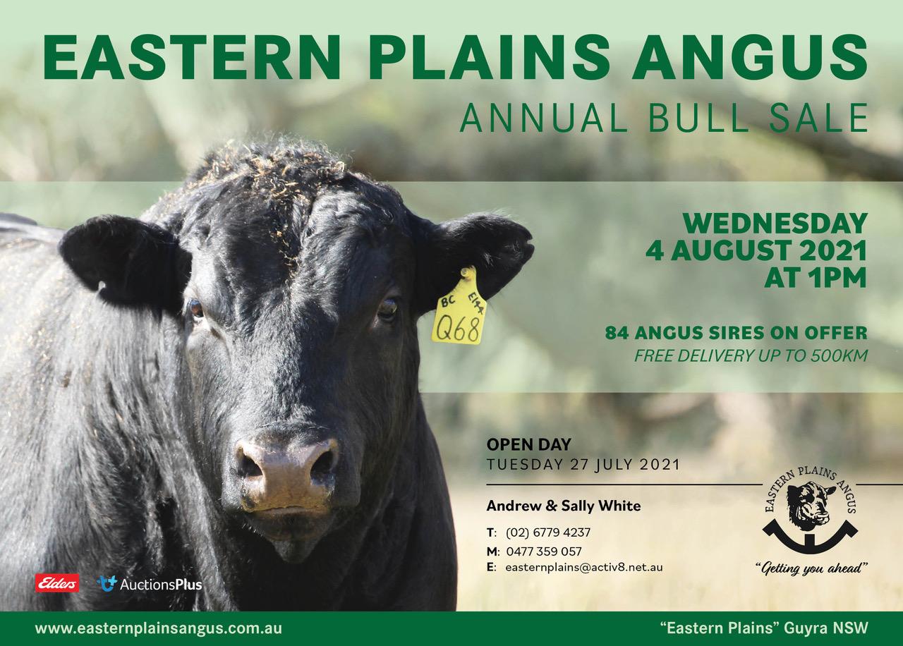 Eastern Plains Angus BULL SALE