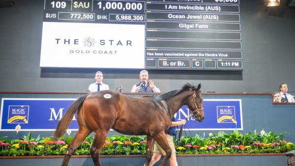 Invincible is all the rage at weanling sale