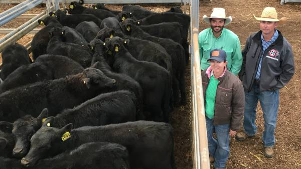 Casslis cows and calves top at $3600 at annual Scone Angus sale