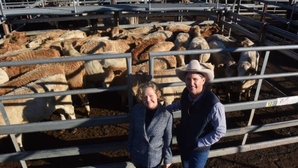 Grafton steers to 744c as restocker prices kick-on