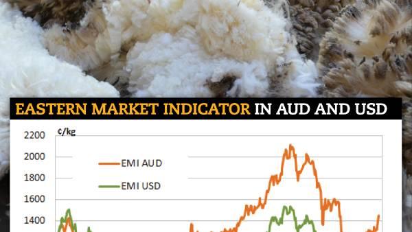 Wool market lights up despite larger offering