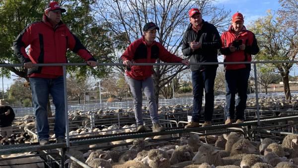 Ouyen crossbred lambs to $274