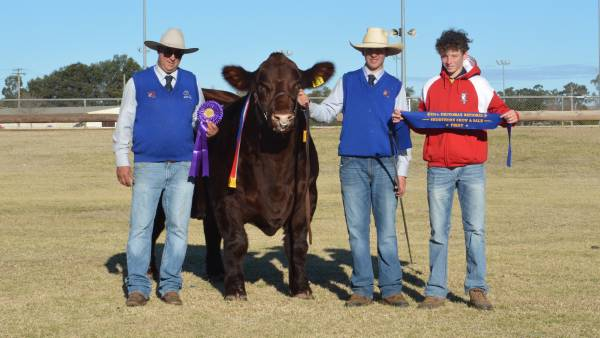 Nagol Park bull is grand champion of Dubbo Shorthorn National Show