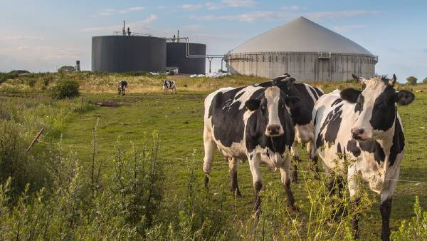 How your dairy farm may benefit from a gas hot water system