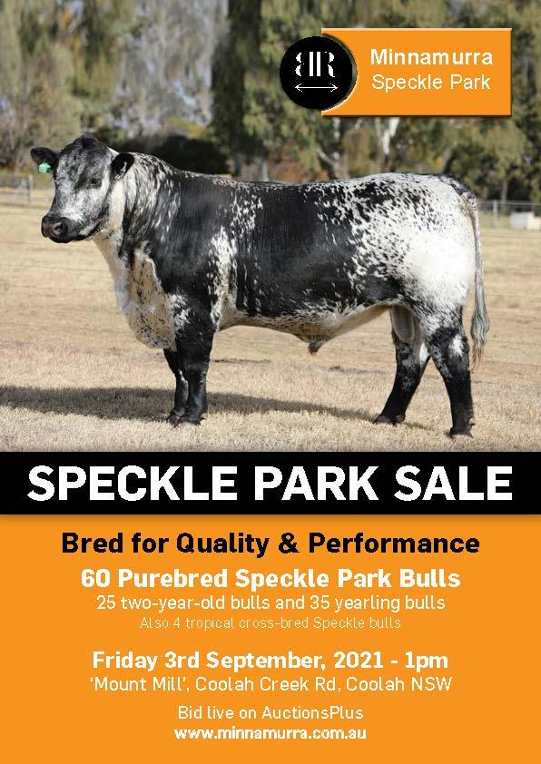 Minnamurra Speckle Park Bull Sale