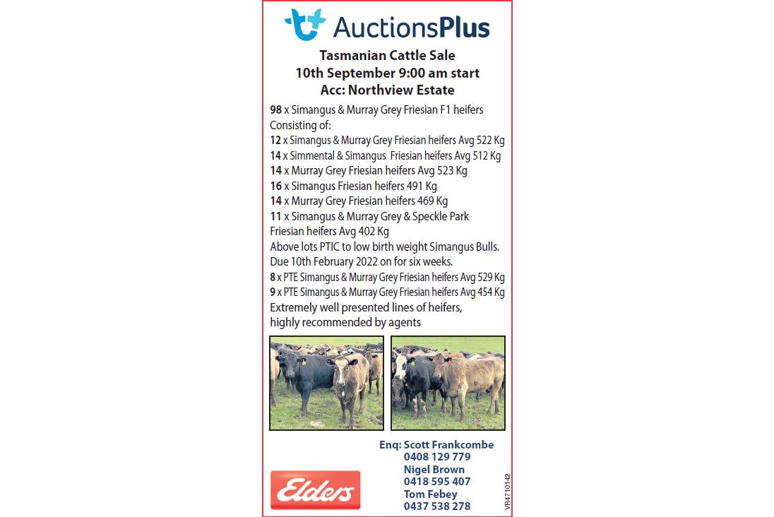 AuctionsPlus  Tasmanian Cattle Sale  Acc: Northview Estate