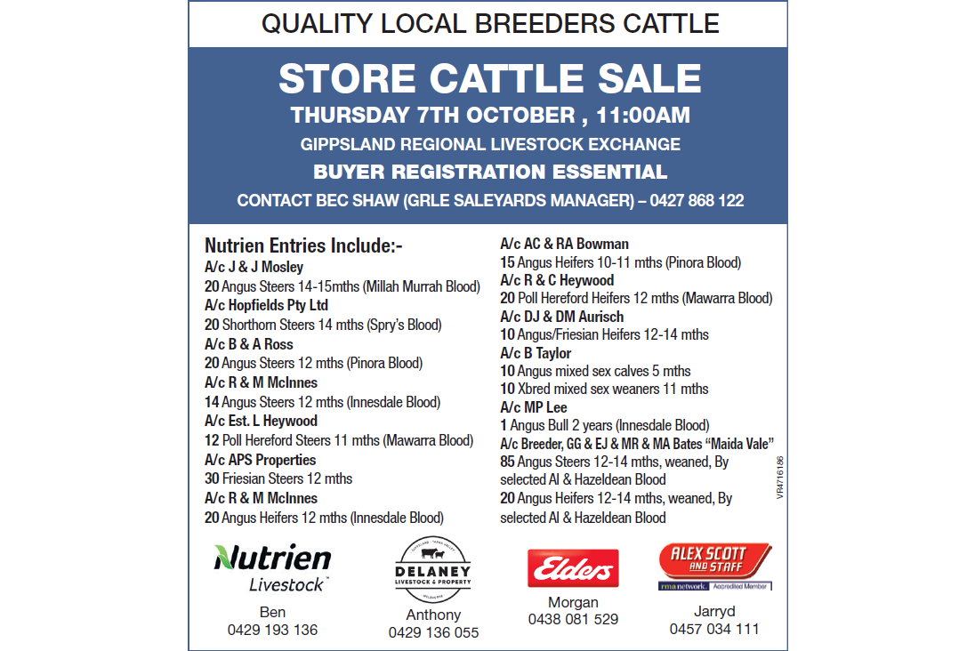 QUALITY LOCAL BREEDERS CATTLE STORE CATTLE SALE  GIPPSLAND REGIONAL LIVESTOCK EXCHANGE