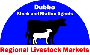 Dubbo Store Cattle Sale