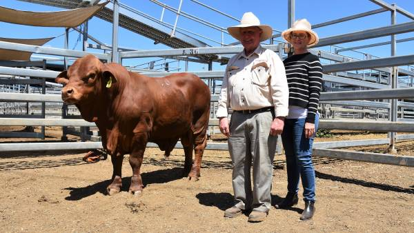 Glenavon genetics sell to $30,000 at Gracemere