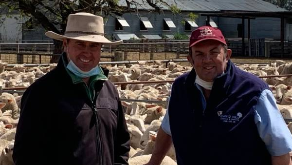 Gnadbro first-cross ewes average $449 | Photos