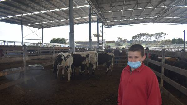 Light cattle raise the roof at Warrnambool