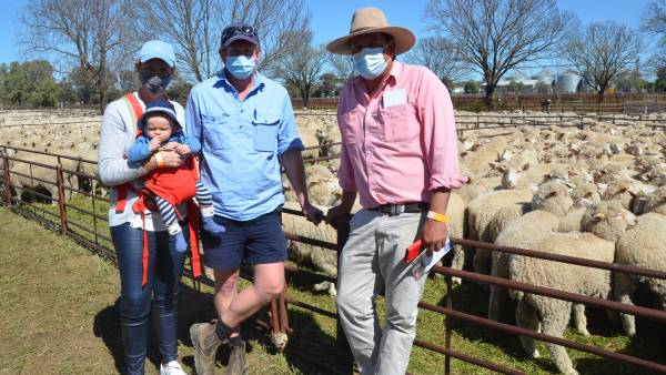 Lamb prices steady while mutton takes a hit