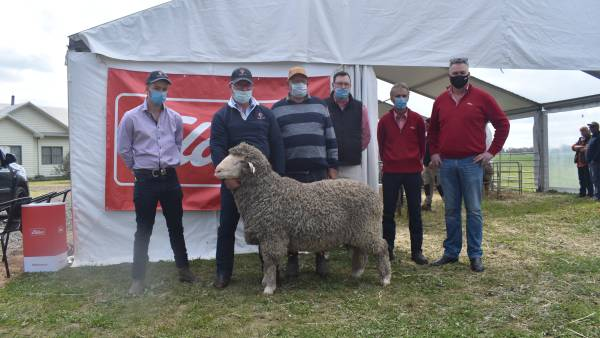 Forest Springs rams top at $9500, average jumps to $2139