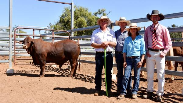Carnarvon Classic Droughtmaster sale hits a high of $34,000 | Photos