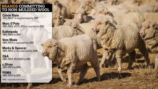 Big name fashion brands shun mulesed wool
