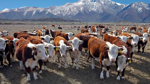 Less beef from Argentina to push global prices higher
