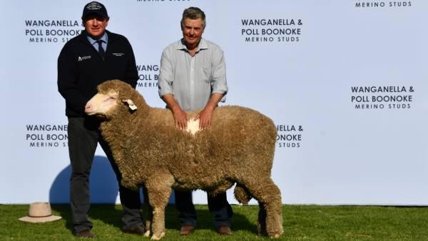 Wanganella and Poll Boonoke rams averaged $4513