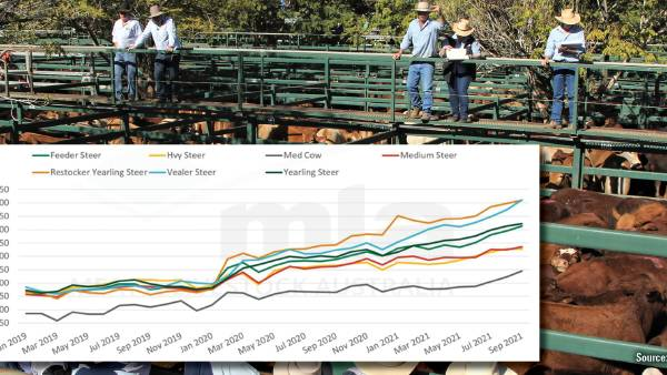 Cattle prices across the board hit new highs