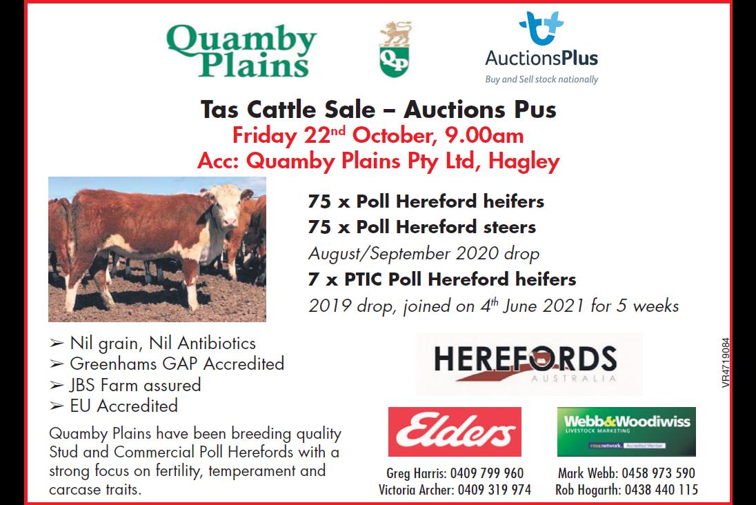 Tas Cattle Sale – Auctions Plus
